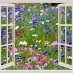 ventana flores