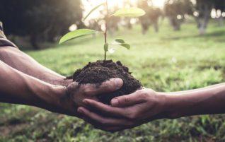 Formación para la Vida + Empleo Verde
